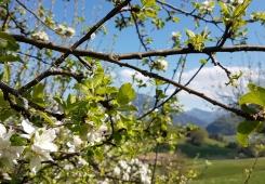Frühling im Steinberger Hof Ruhpolding